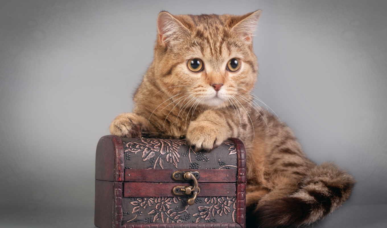 кошки, зарегистрируйтесь, войдите, contact, россия,