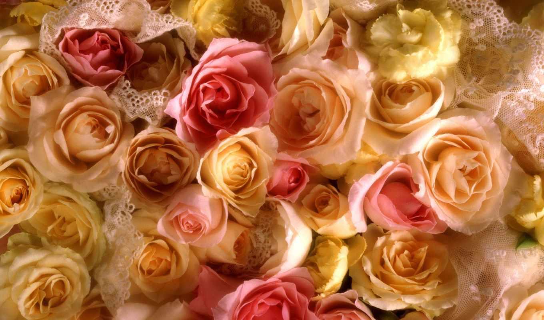 розы, cvety, роз, желтые, роза, букет,