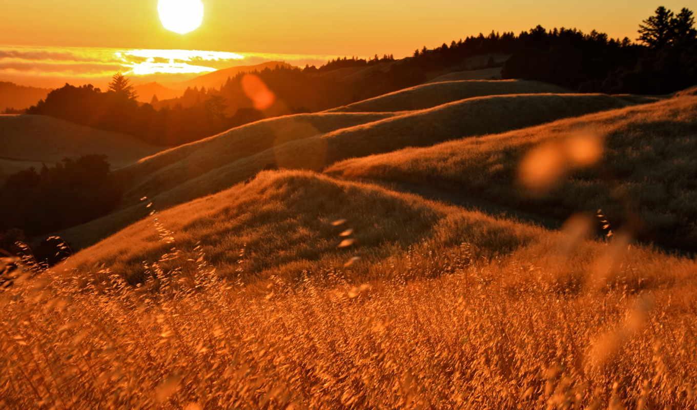 закат, холмы, sun, травы, блики, калифорния,