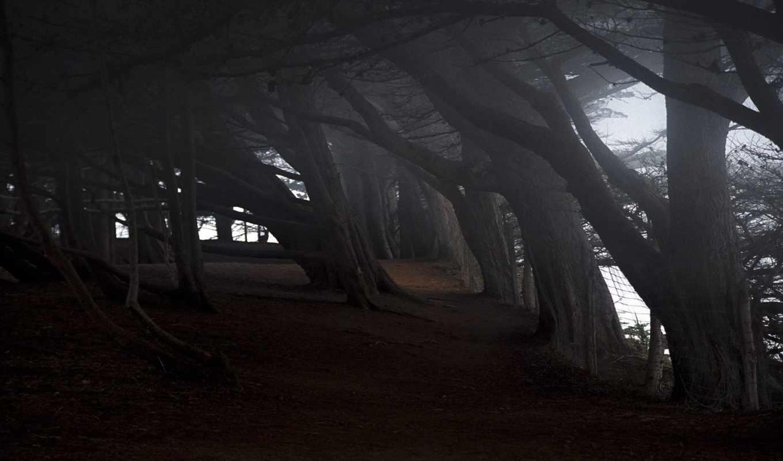 мрачные, trees, darkness, побережье, tilt,