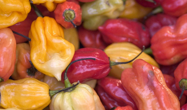 hot, chili, powder, artist, frutas, interfacelift, red,