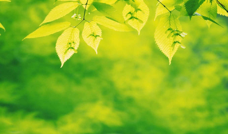 green, leaves, pe, dawn, download, plants, desktop, wide,