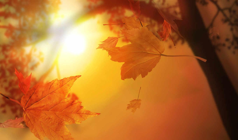 листья, autumn, you, солнце, live, if, нравится, our, осенние, dream,