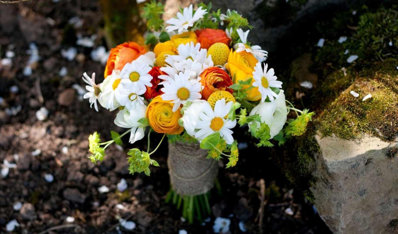 букет, розы, ромашка, ромашки, цветы, полевые, макро,