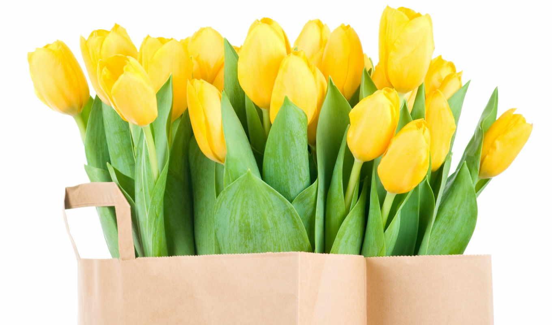 тюльпаны, желтые, букет, цветы, весна, природа,