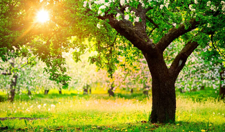 apple, рисунок, весна, яблони, деревя, природа,