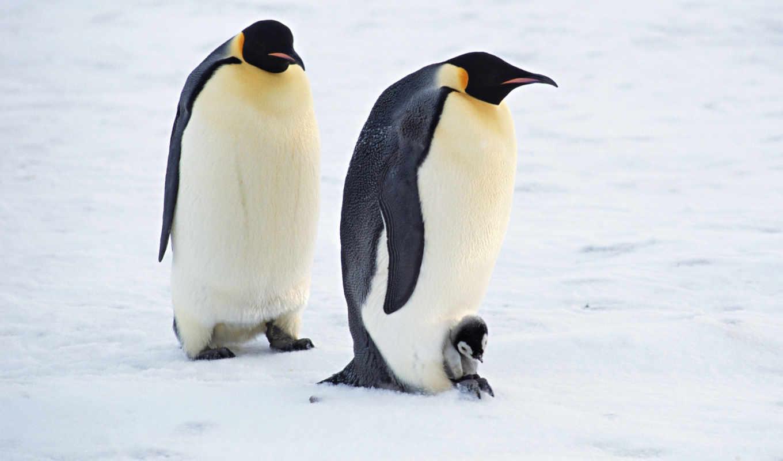 zhivotnye, животных, детей, разных, арктики,