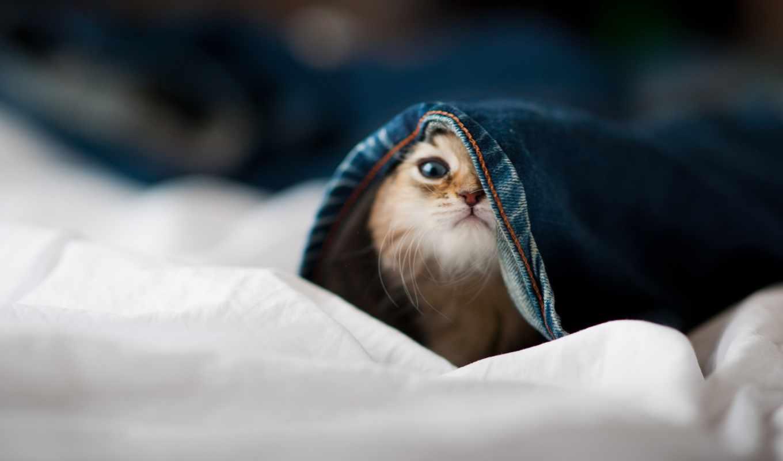 котенок, котенка, выглядывает, котэ, интернет,
