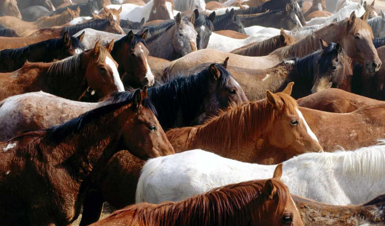 табун, лошади, лошадей, диких, zhivotnye,