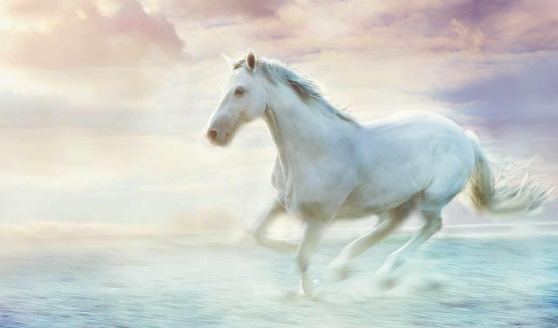 лошадь, стена, art, ala, dzieci-cy, white, декор, paarden, public