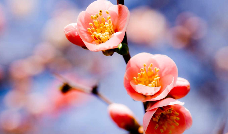 цветы, ветка, макро, растение, листья, лепестки, bloom, картинку, springtime, картинка,