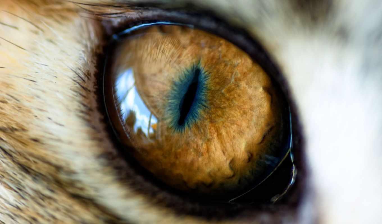 ojos, leopardo, imagenes, fotos,