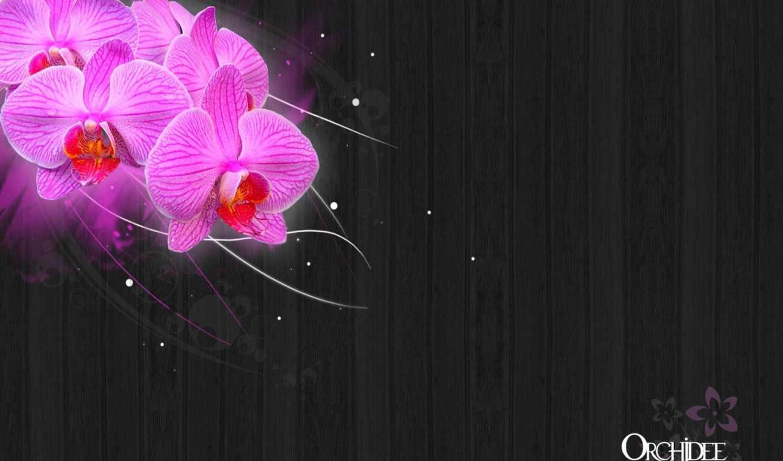 orchideen, orchidee, desktop, von, rosen, free, bei,