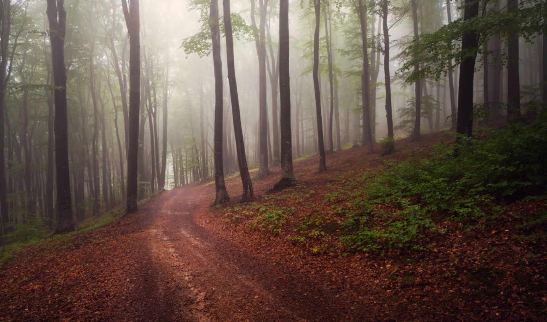 лес, been, tagged, has, осень, following, this, keywords, изображение,