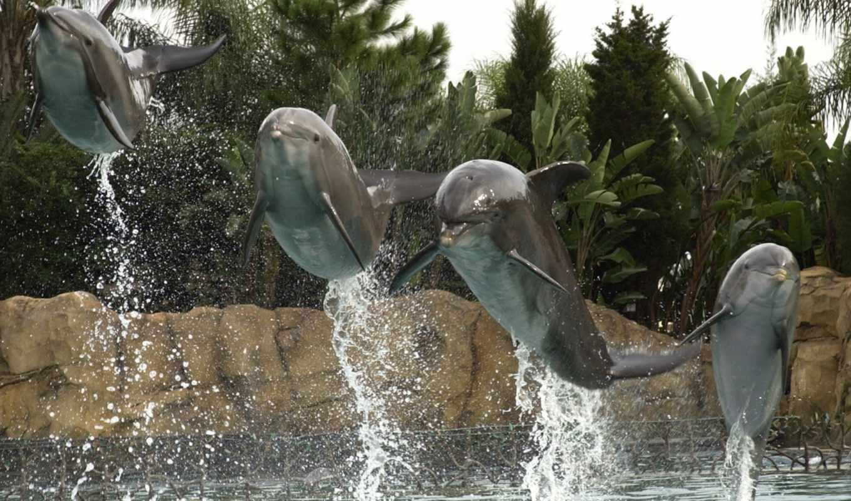 discovery, cove, dolphins, orlando, florida, you, если,