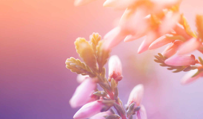 макро, цветы, природа, лепестки, свет, краски, flowers, petals,
