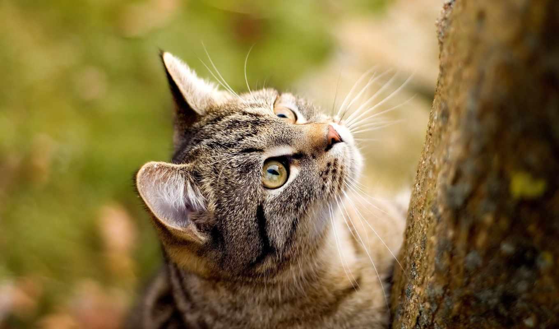 обои, кошки, кот, коты, kb, морда, дерево, котята,