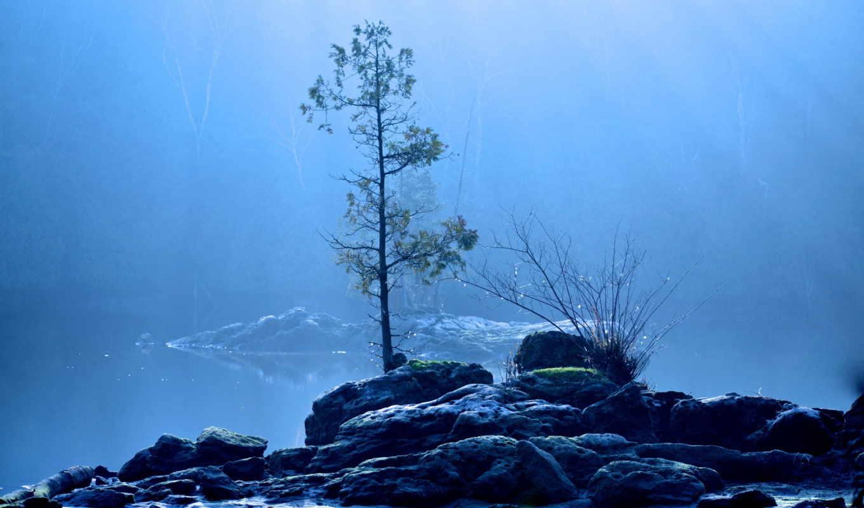 дерево, природа, туман,
