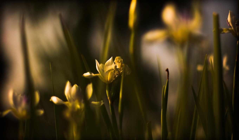 цветы, девушек, красивых, подборка, природа, высоком, марта, share,
