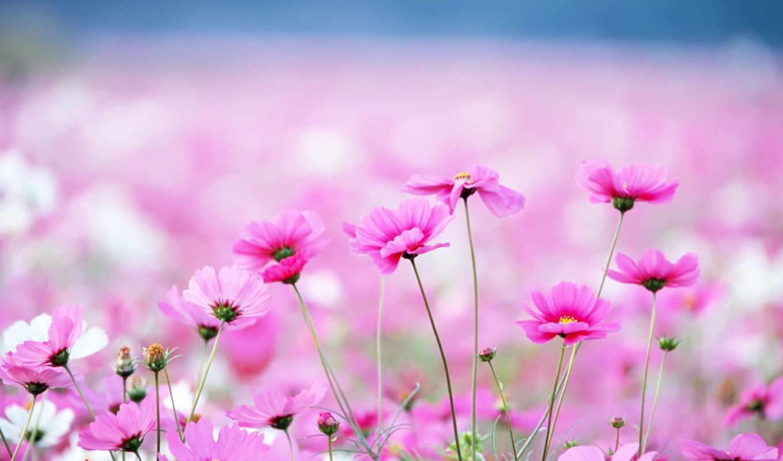 cvety, полевые, комментарии, пазлы, код,