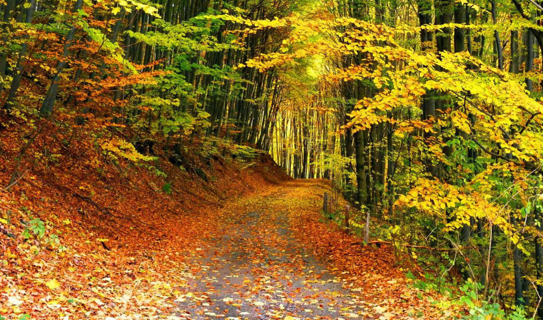 осень, лес, тропинка, листья, desktop, trees, high, widescreen,