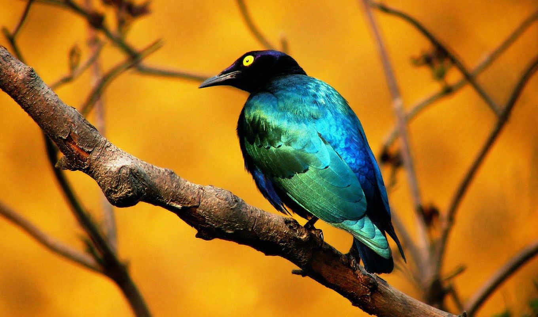 animals, full, animales, birds, птица, imagui, fotos, descripción,