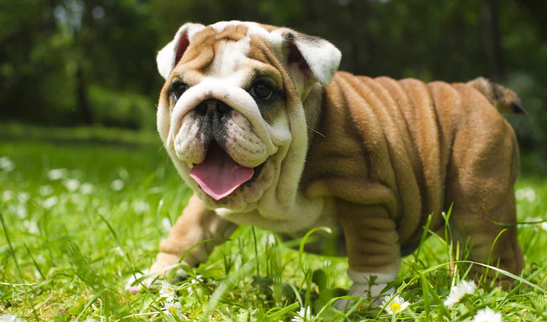 показать, animal, хирургия, listings, ветеринарный, pia, hospitals,
