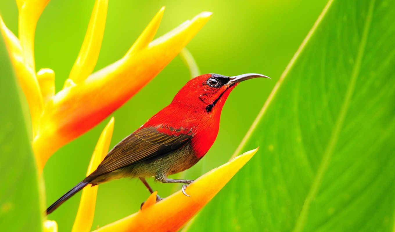 vogel, vögel, tapete, lovely, frühjahr, birds, hintergrundbild, tiere, птица, desktop,