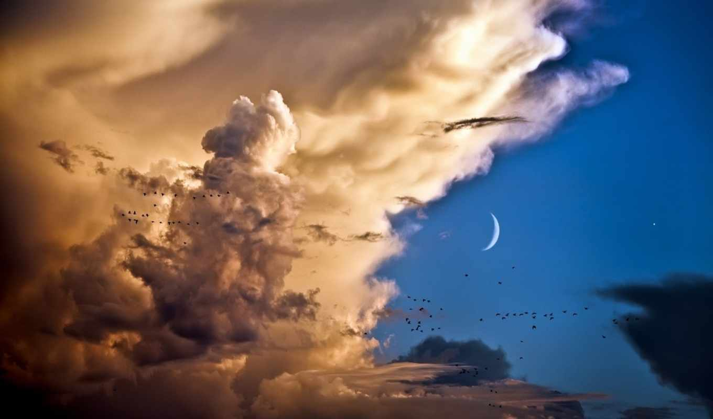 птицы, небо, clouds, облака, месяц, moon, облаках, venus,