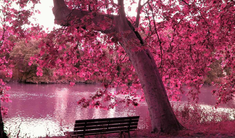 пруд, дерево, скамейка, лес, озеро, природа, водоём, artis, листья,