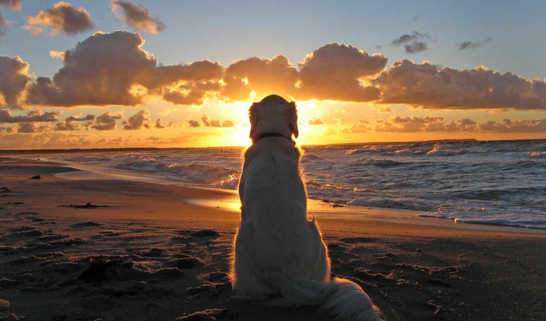 закат, море, пес, собака
