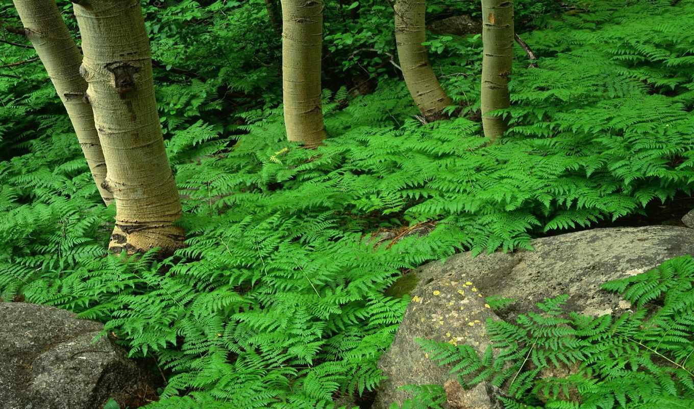 папоротник, лес, зелёный, single, растение, бабочка, leaf,