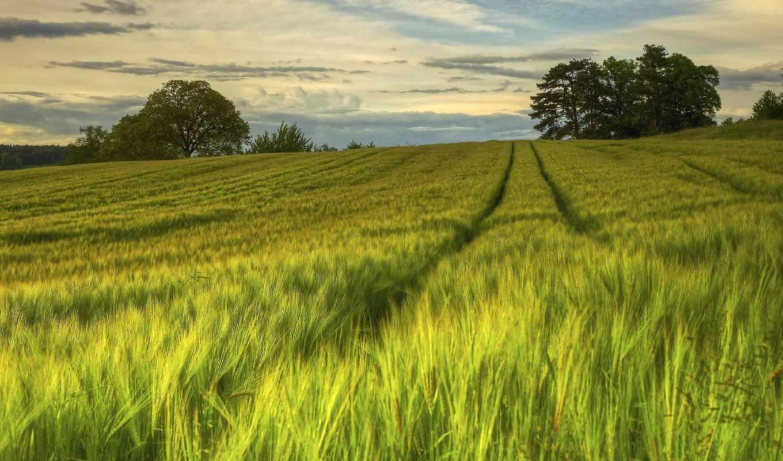 природа, поля, sweden, серьги, вечер, поле, summer,