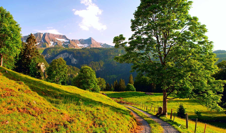 landscape, деревя, дорога, summer, природа, пейзажи -, картины, горы, цветы, макро, devushki,