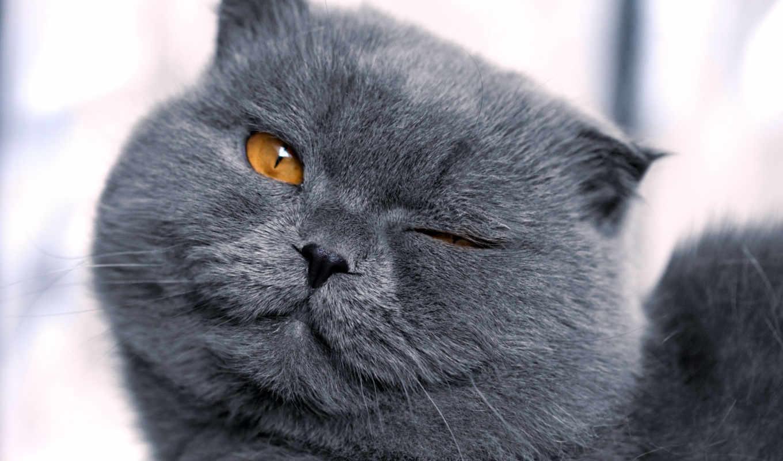 коты, брутальные, июнь, zhivotnye,