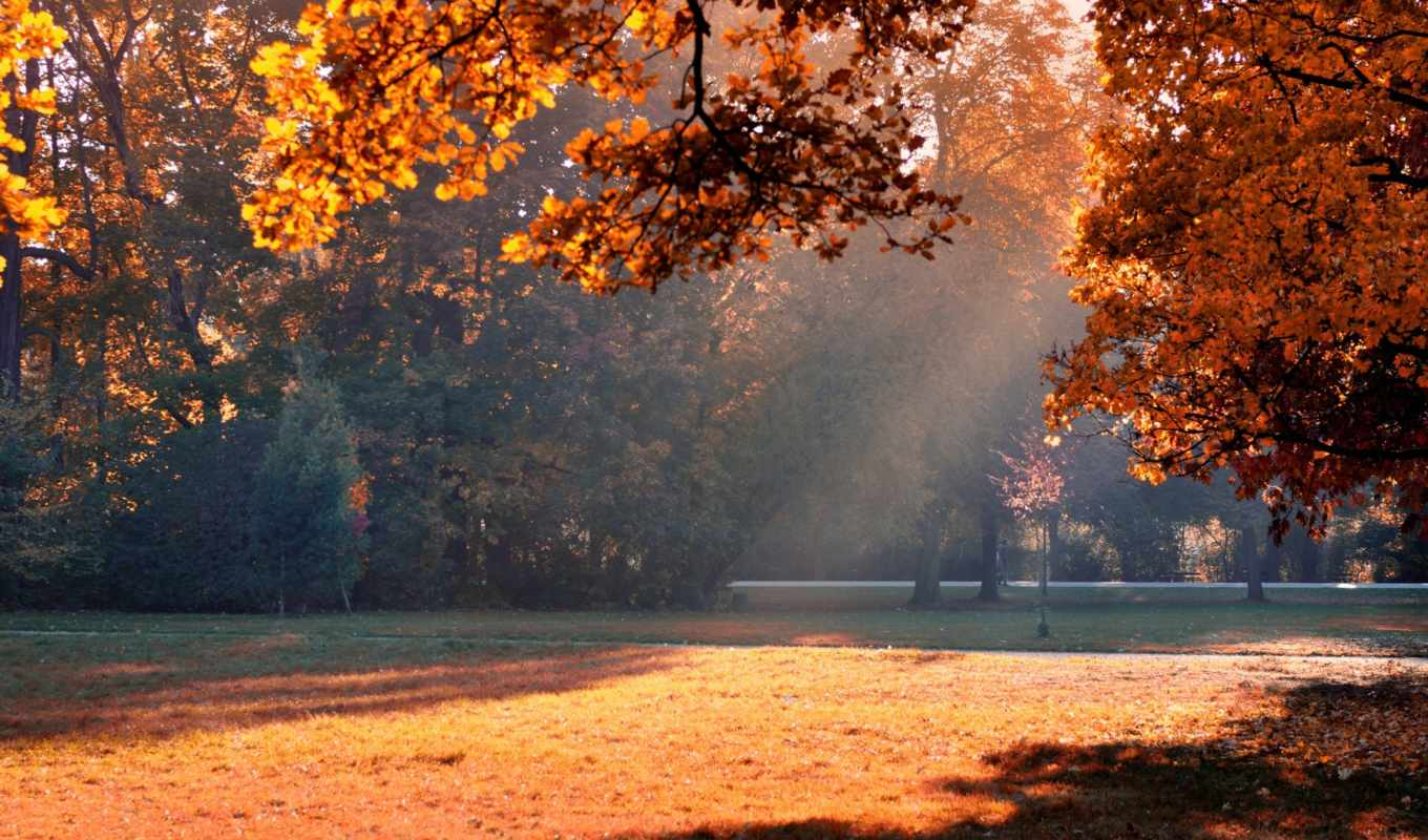 autumn, sunshine, park, resolution,