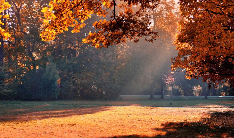 autumn, sunshine, park, resolution,