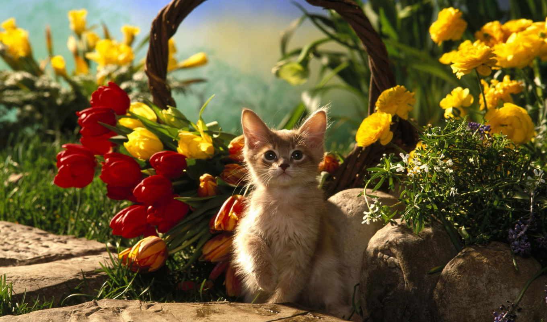 тюльпаны, марта, цветы, card, поздравляю, мар, весенние, цитатник, люблю, желтые, еще,