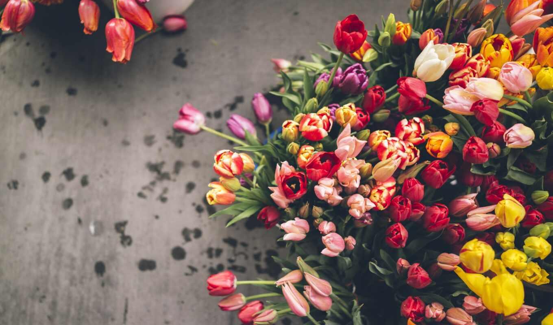 тюльпаны, цветы, букет, разноцветные, тюльпанов, много,