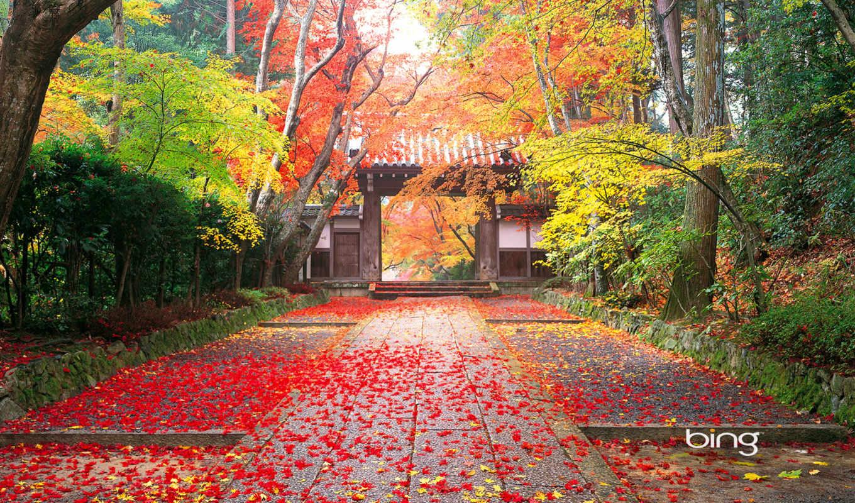 японии, церемония, чайная, windows, друзья, осень,