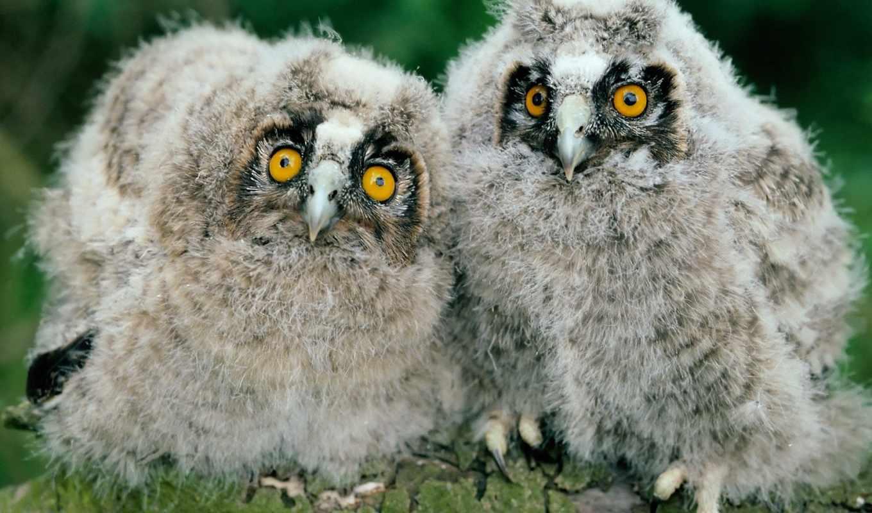 прикольные, птицы, птиц, очен, улыбнуться, eti, любому, пташки,