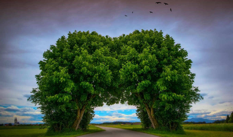 дерево, туннель, дорога, деревья, desktop,