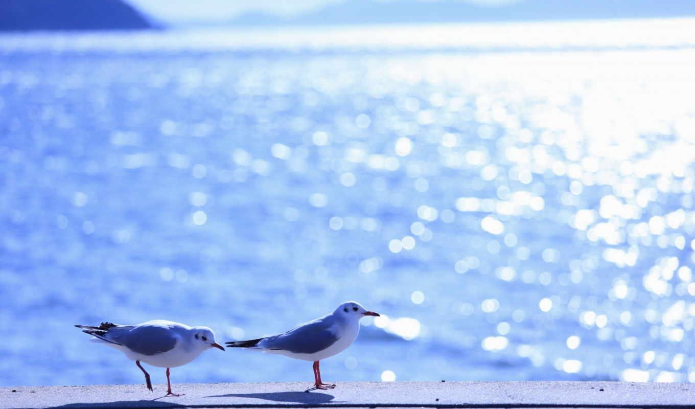 чаек, пара, чайки, море, блики, солнце, разрешении, волны, вода, свет, птицы,