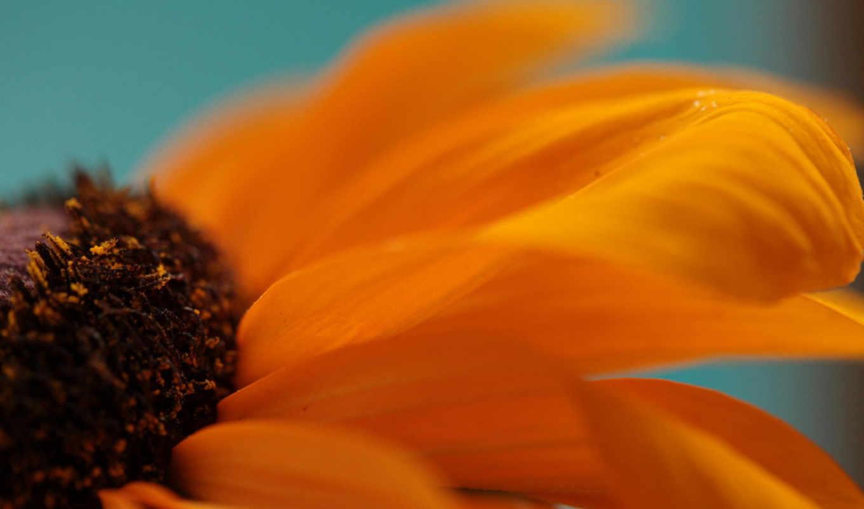 ,beautiful, colorful, flower, flowers, nature, petals, plant,