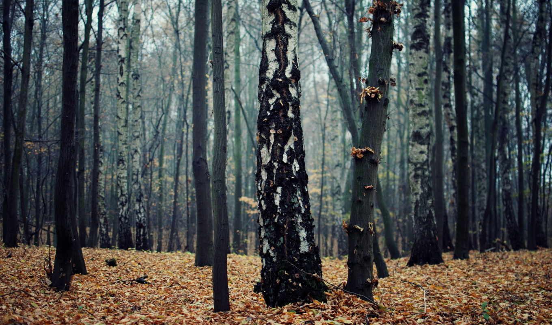 природа, осень,
