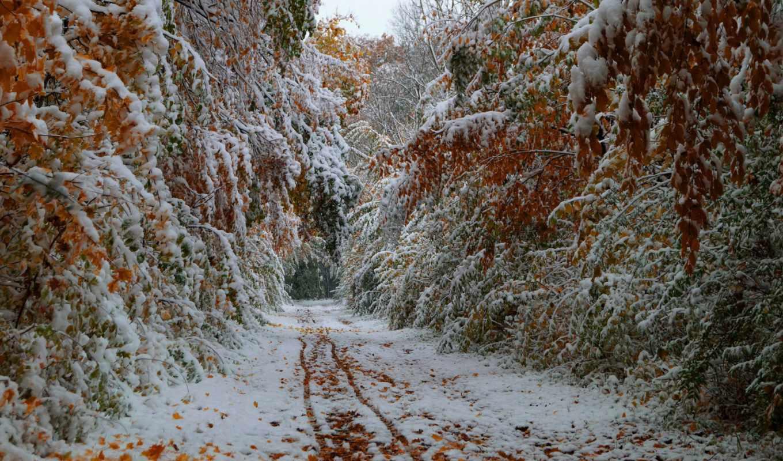 снег, осень, деревья, первый, дороги, октябрь, пейзаж,