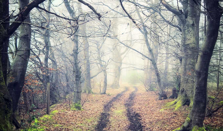 природа, дорога, деревья, осень, лес, туман, тропа, листья,