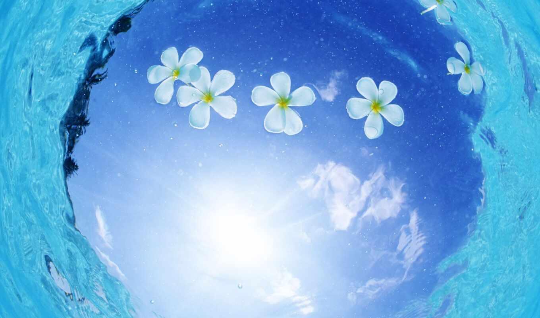 волга, спокойствие, природа, цветы, салон