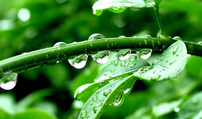 макро, растение, капли, листья, green, разделе, природа,