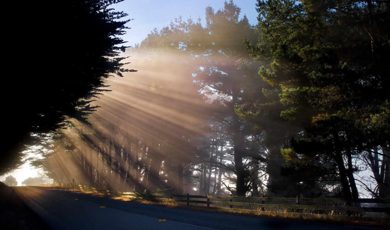promienie, słońca, утро, que, дрога, drzewa, доброе, лучи, para, дорога,